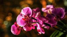 Орхидеи. Архивное фото