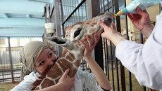 В Калининградском зоопарке родился жираф Reticulate Giraffe