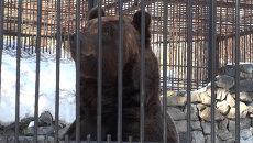 Медведи в Новосибирском зоопарке вышли из спячки