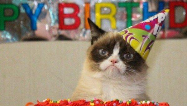 Кошка по имени Соус Тартар, известная в Сети как Grumpy Cat