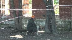 Более 100 потерявшихся человек нашли собаки-спасатели на учениях во Владивостоке