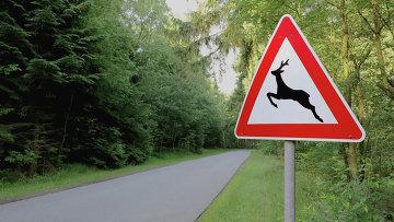 Дорожный знак Осторожно дикие животные. Архивное фото