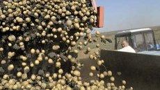 Уборка картофеля. Архив