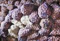 Сельхозпредприятия Удмуртии отправят в Амурскую область 60 тонн картофеля