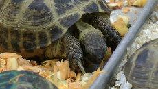 Выброшенных черепах в Новосибирске спасают ваннами, уколами и едой