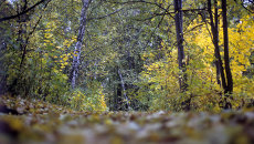 Лес в Подмосковье. Архивное фото