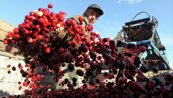 Украинцев наОльманы заклюквой начнут пускать 3сентября