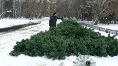 Главная елка Томска приехала в 90 коробках из Подмосковья