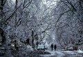 Последствия ледяного дождя в Канаде. Фото с места событий