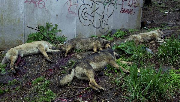 фото собак убитых