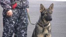 Собачий спецназ показали Красноярскому студенческому десанту