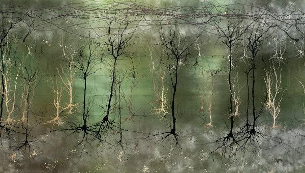 Визуализация сложной структуры коры головного мозга. Архивное фото