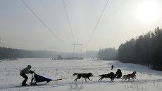 Хаски в упряжке: чемпионат по ездовому спорту прошел в Красноярске