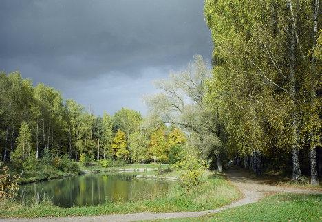 Деревья, пруд