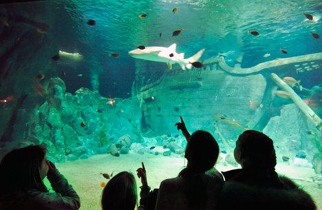 Открытие океанариума Sоchi Discovery World в Сочи