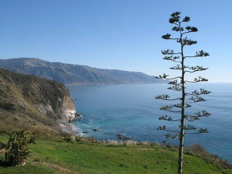Побережье Тихого океана, Калифорния