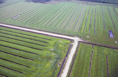 Сельскохозяйственное поле
