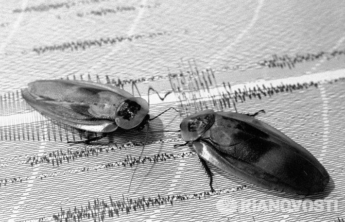 Колумбийские тараканы